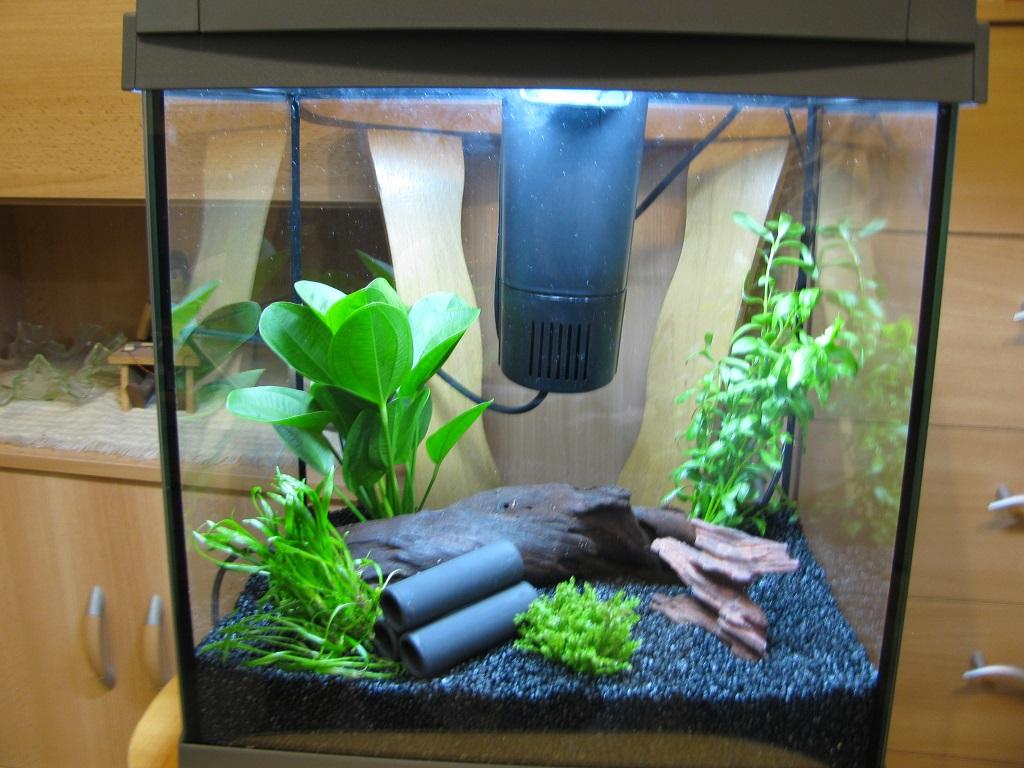 Nanoaquarium f r aquariumfische jetz auch im blog for Aquarium fische im gartenteich