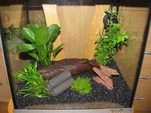 Pflanzen und Dekoration für das Nanoaquarium