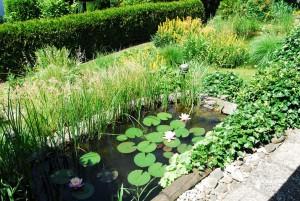 Gartenteich im eigenen Garten