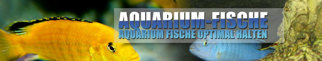 Aquarium Fische
